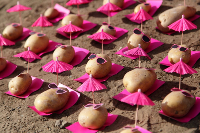 peter-pink-potatoes-designboom-12
