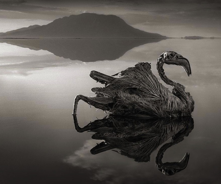 lake-natron-calcium-salt-petrified-animals-nick-brandt-1