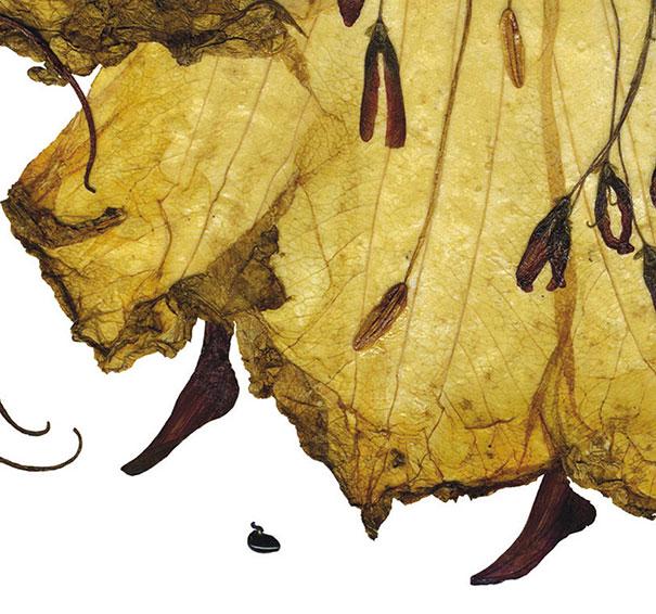 dried-floral-art-florotypie-elzbieta-wodala-14