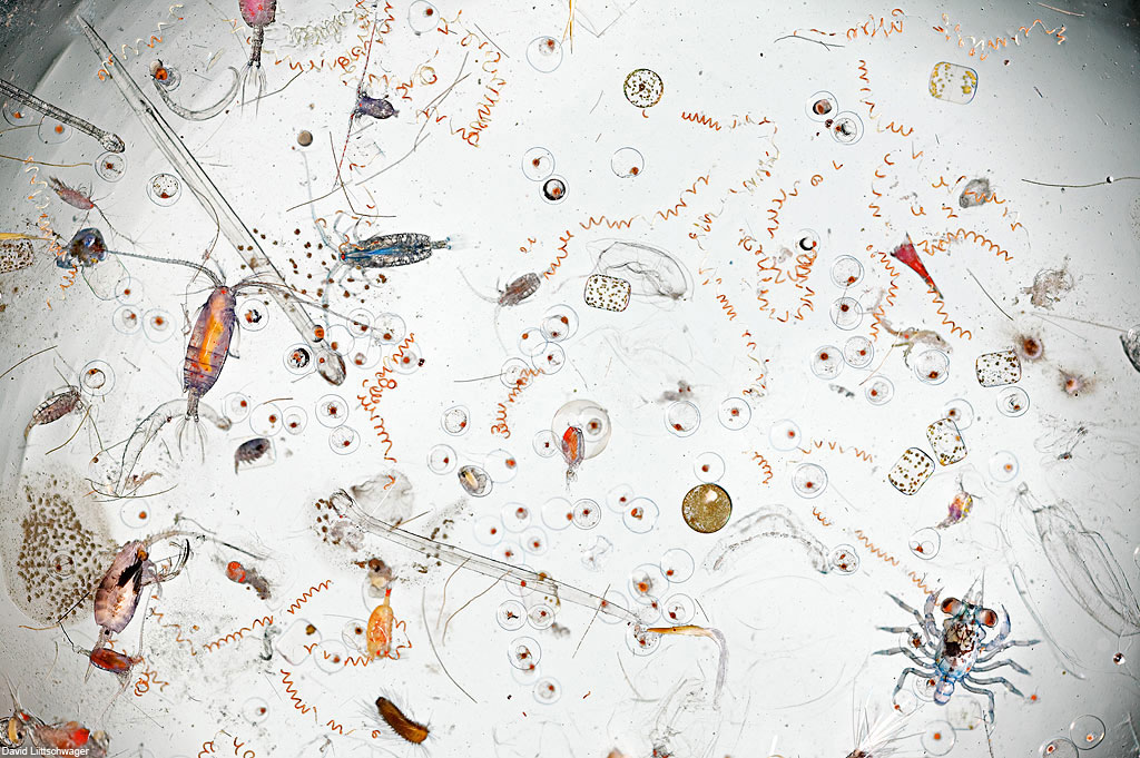 A Single Drop of Seawater, Magnified 25 Times   water science nature microbes