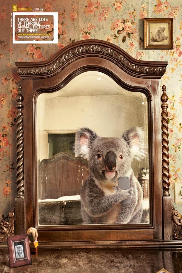 wildlife-selfies-4