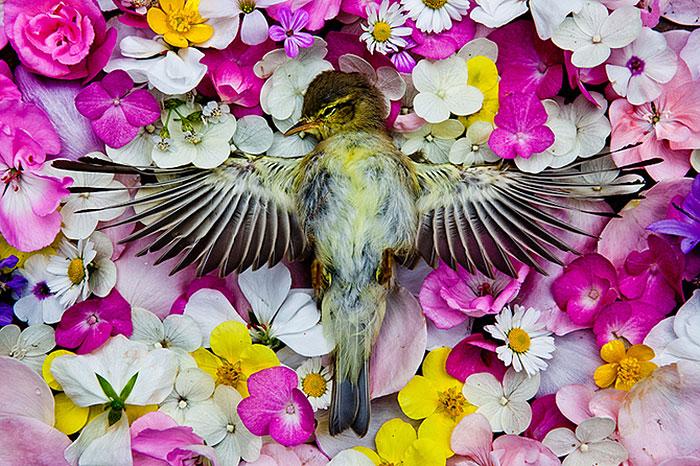 natura-morte-honoring-dead-animals-marina-ionowa-gribina-2
