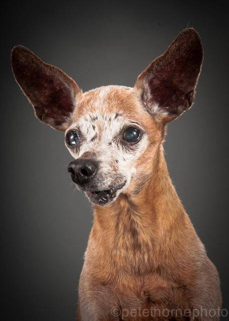 Portraits-of-Really-Old-Dogs-4