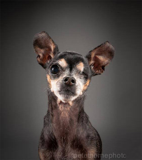 old-dog-portrait-photography-old-faithful-pete-thorne-1